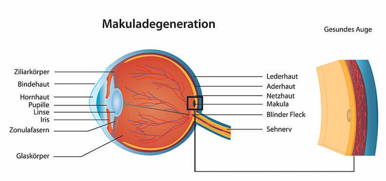 Gesundheitsblog Makuladegeneration gesundes Auge